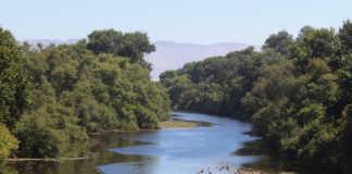 Pajaro River levee