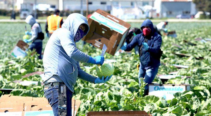 Farmworkers COVID-19