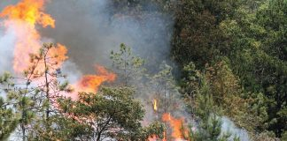 aptos/la selva fire central fire