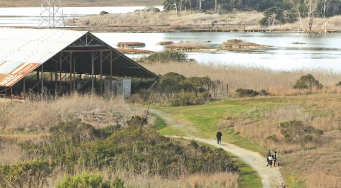 Elkhorn Slough restoration grant