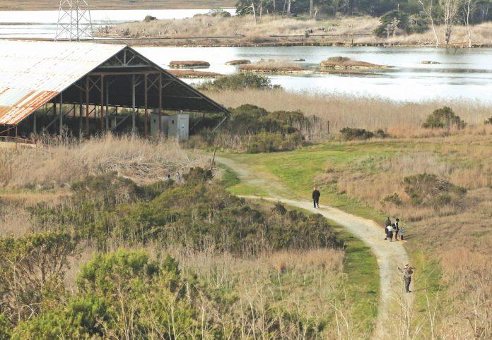 Elkhorn Slough restoration grant