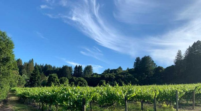wineries pajaro valley