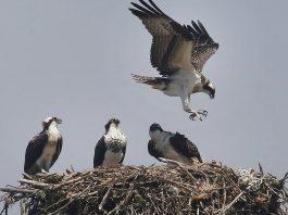 Monterey Bay Birding Festival